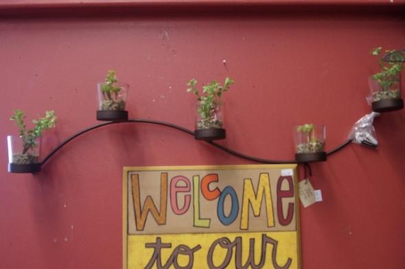 succulents4